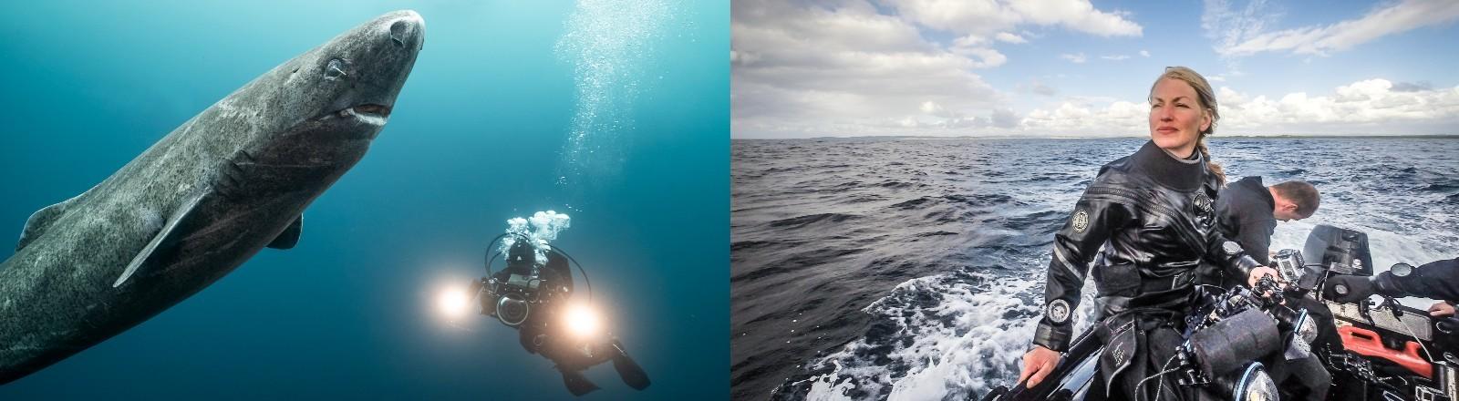Eishai und Unterwasser Kamerafrau Christina Karliczek