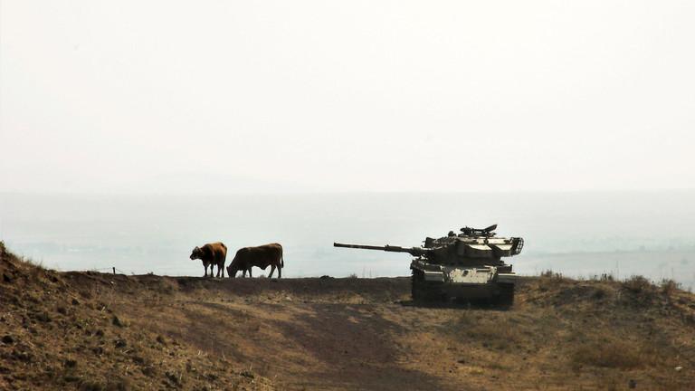 Ein Panzer neben zwei Kühen auf den Golanhöhen