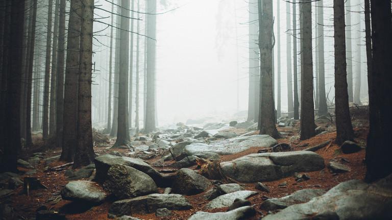 Wanderung im Harz