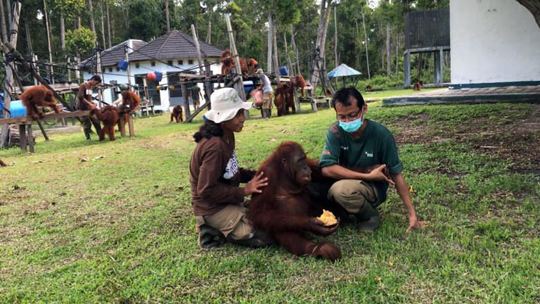 Zwei Tierpfleger kümmern sich um den jungen Orang-Utan Henry.