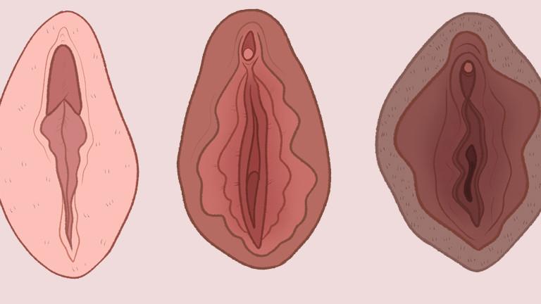 Vagina Bilder