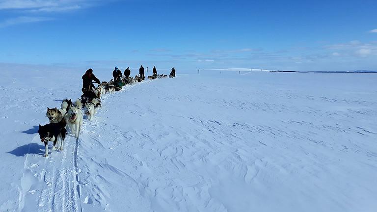 Hendrik Stachnau unterwegs mit seinen Schlittenhunden.