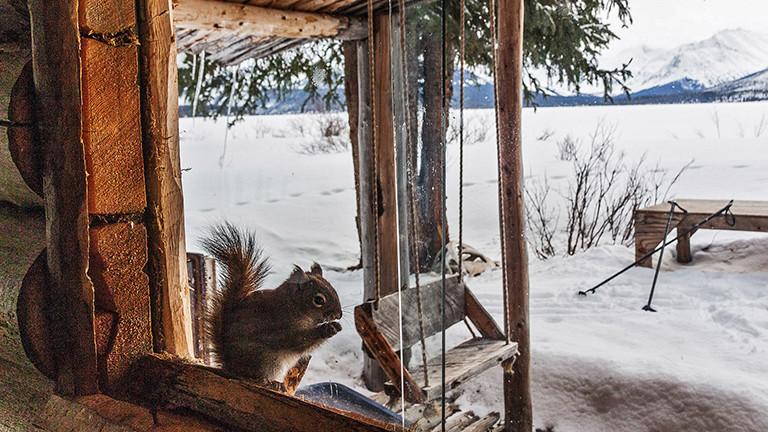Eine Blockhütte in Kanada.