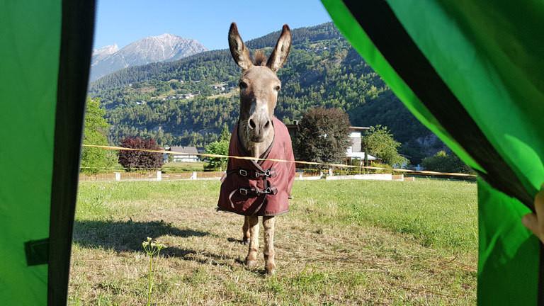 Blick auf den Esel Jonny aus dem Zelt.