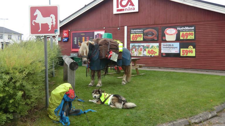 Die Begleiter von Sarah Langmaack auf dem Pferdeparkplatz vor einem Supermarkt: Pferd Santano und der Husky Qaanaag.