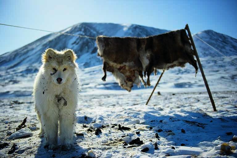 Im Osten der russischen Föderation: Szene aus Tschukotka