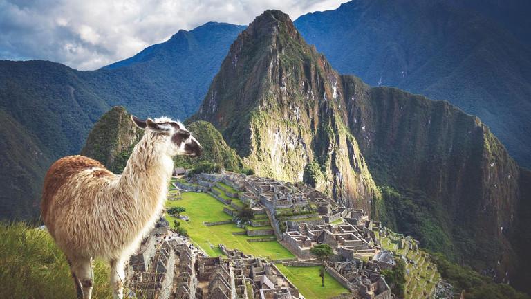 Ein Lama in Machu Picchu, Peru