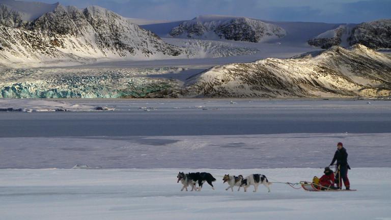 Hundeschlitten in der Arktis