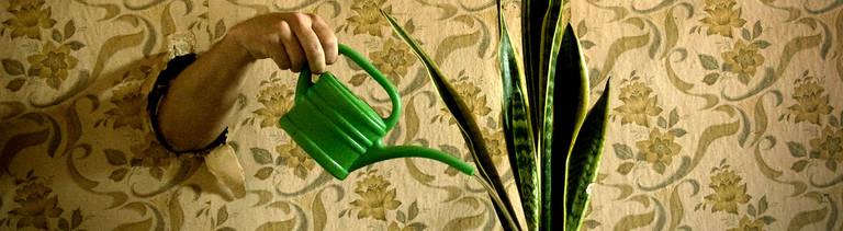 Ein Arm schaut aus einer Wand heraus und gießt eine Topfpflanze mit einer Gießkanne.