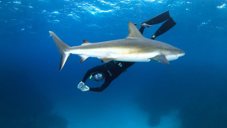 Hai-Experte Erich Ritter tauch mit einem Hai.