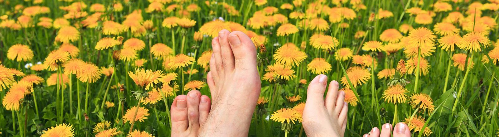 Ein Männer- und ein Frauenpaar Füße in einer Frühlingswiese