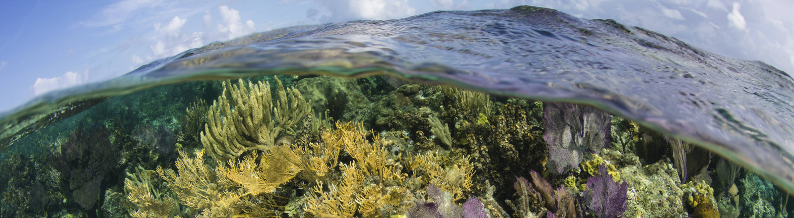 Korallenriff in der karibischen See