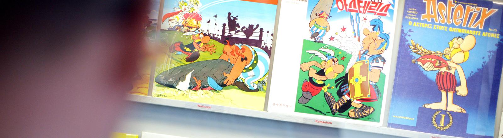 Ein Asterix-Fan betrachtet am Samstag (13.08.2011) im Römermuseum in Haltern am See (Nordrhein-Westfalen) Asterix-Hefte aus verschiedenen Ländern.