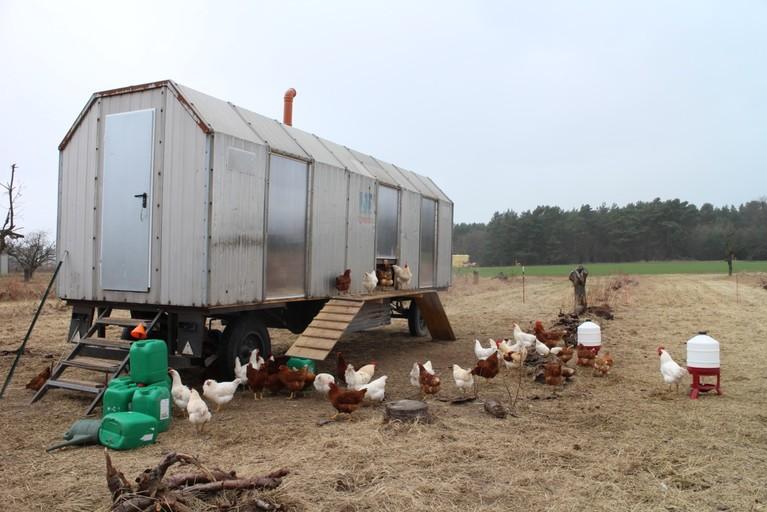 Das Hühnermobil von Jochen Fritz parkt derzeit auf einer alten Kirschplantage