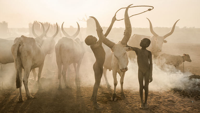Zwei Kinder fassen die Hörner eines Tieres an
