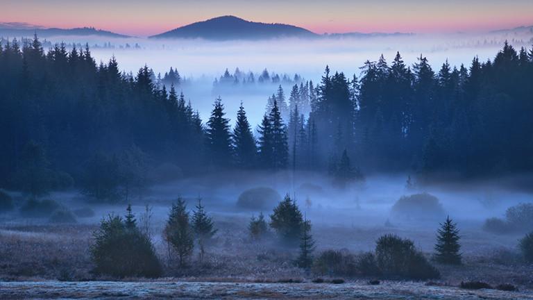 Morgenstimmung, Bayerischer Wald