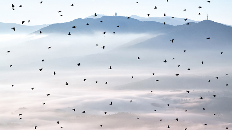 Vogelschwarm, Oberpfälzer Wald