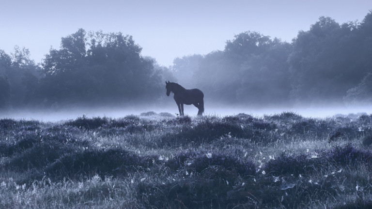 Morgens in der Heide, Niederrhein