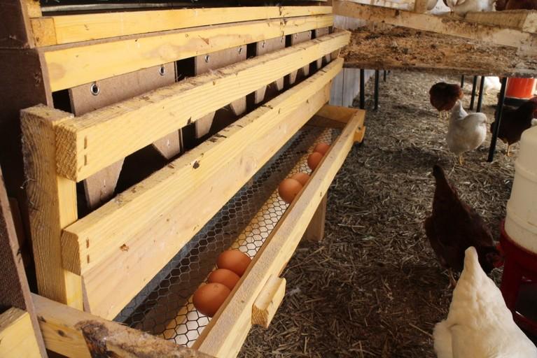 Die gelegten Eier landen dann in Schubladen.