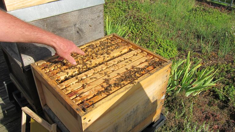 Wie eine WG: ein Jungbienenkasten