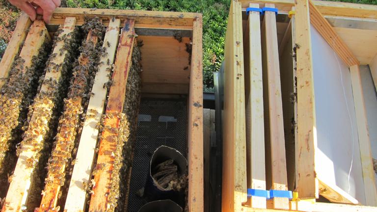 Die Bienenkästen funktionieren im  Hängeschubladenprinzip