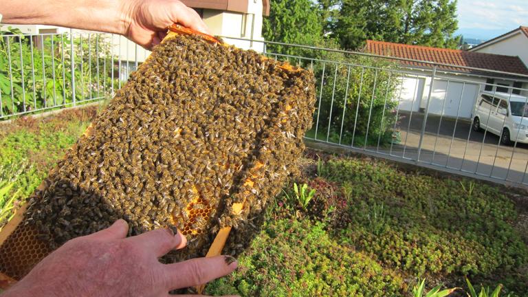 Eine Bienenkastenschublade