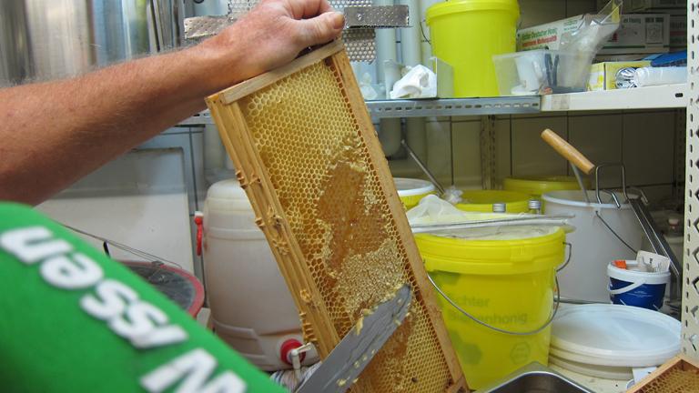 Zur Honiggewinnung wird zuerst die Deckelschicht abgeschabt