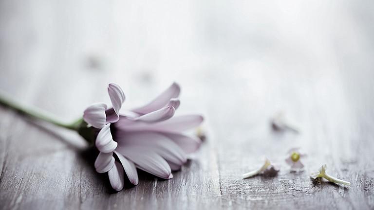 Verwelkte Blume auf einem Tisch