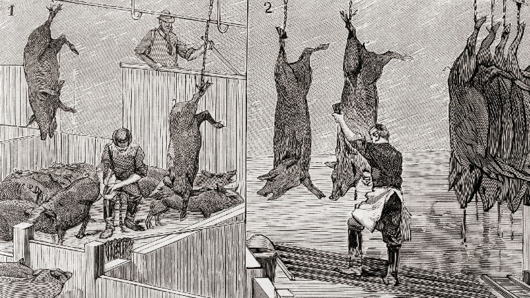 Two scenes from a slaughterhouse in Chicago in 1892; from La Ilustracion Espanola y Americana, published 1892