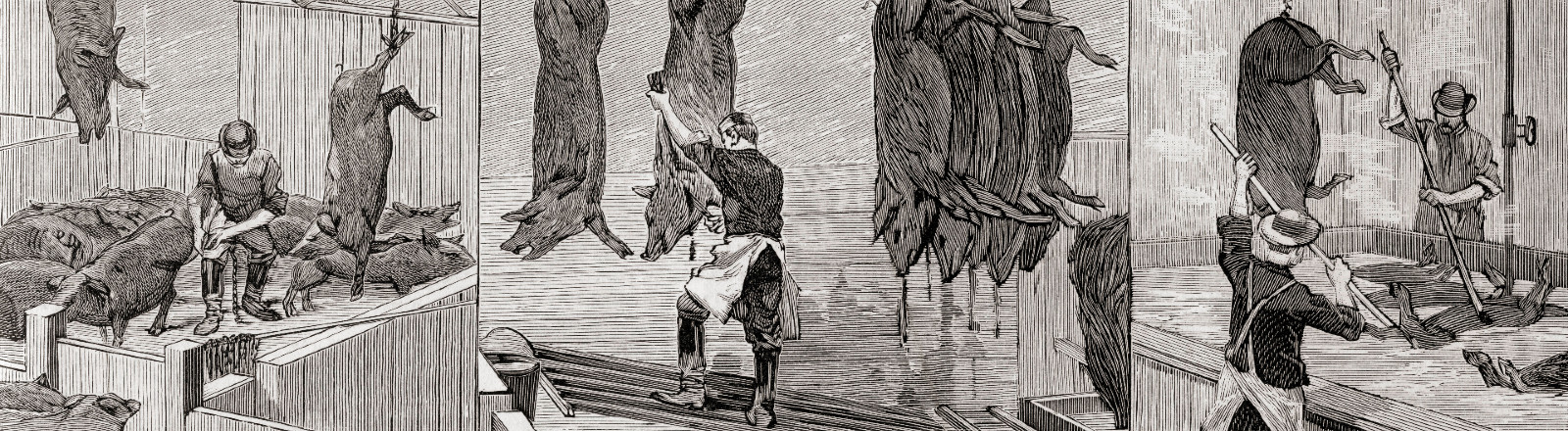 Three scenes from a slaughterhouse in Chicago in 1892; from La Ilustracion Espanola y Americana, published 1892