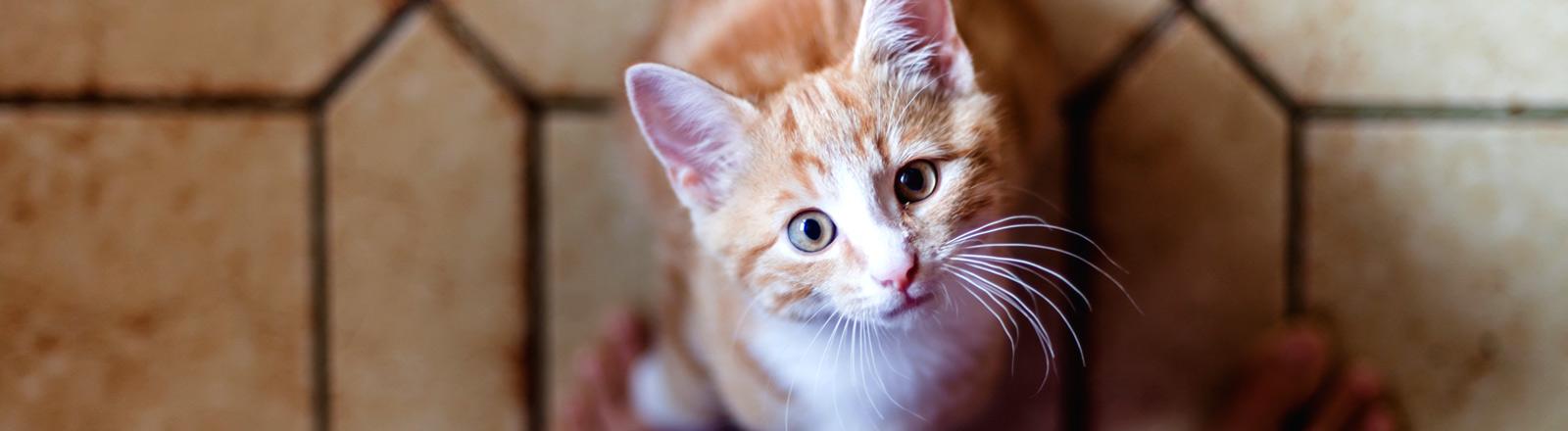 Eine Katze neben einem Paar Füßen schaut hinauf