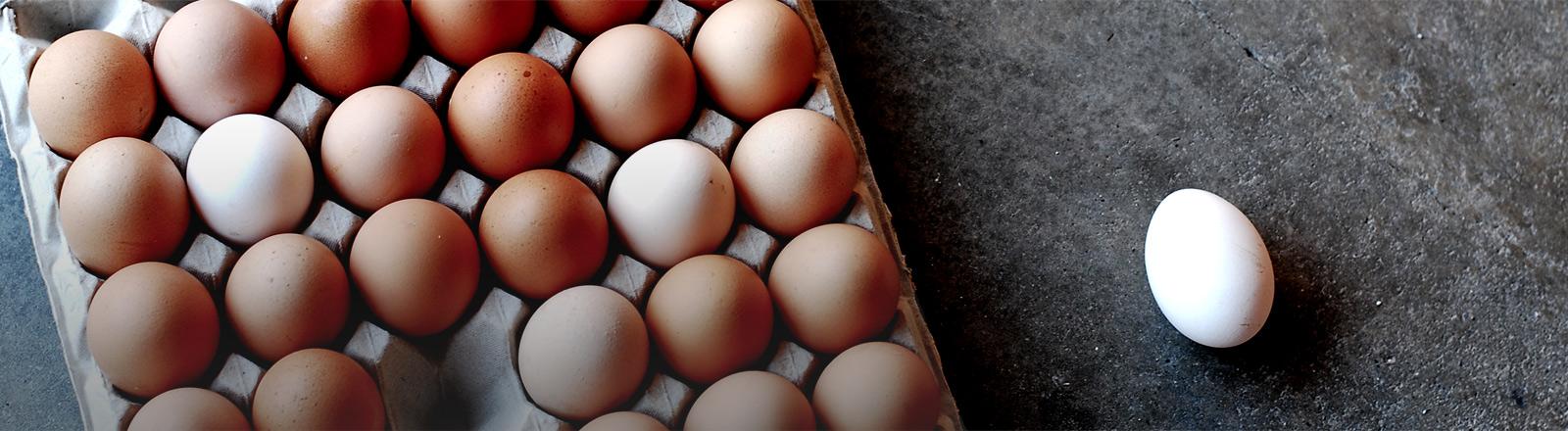 Ein Eierkarton mit braunen Eiern, ein weißes liegt daneben.