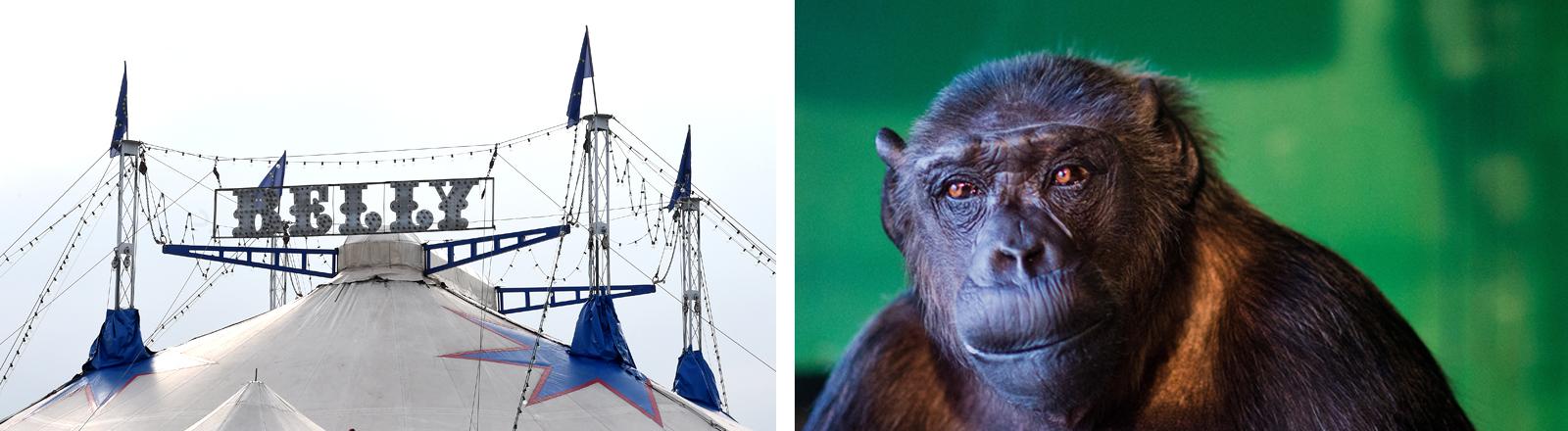 Collage: Zirkus Belly und Schimpanse Robby