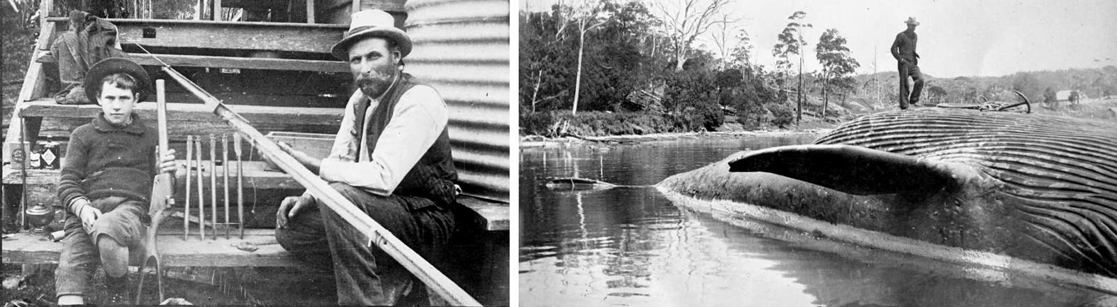 Collage: George Davidson mit seinem Sohn Wallace. unbekannter Mann auf erlegtem Wahl