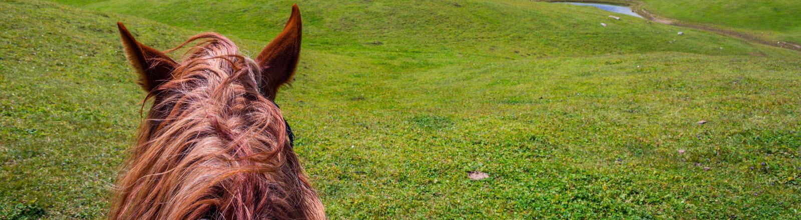 Pferdekopf vom Reiter fotografiert in bergiger Landschaft
