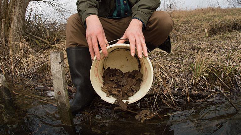 Ein Mann mit einem Eimer, in dem sich Kröten und Frösche befinden