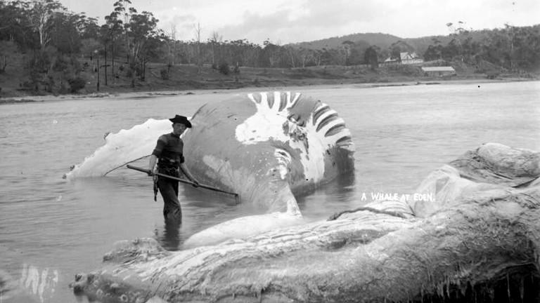 Jack Davidson zerlegt einen Wal