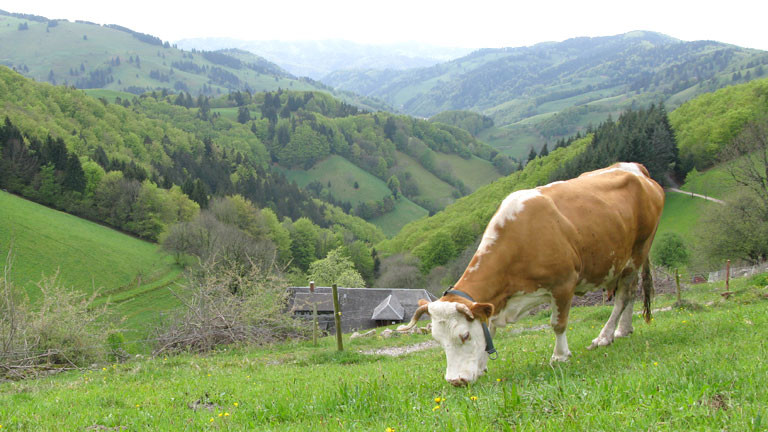 Lisa vor dem Münstertal im Schwarzwald.
