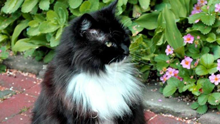 Lucy, die Katze