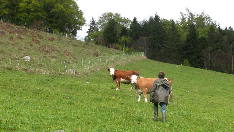 Stephanie Doetzer besucht zwei Kühe auf der Weide