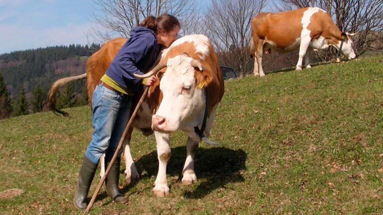 Stephanie Doetzer küsst eine Kuh