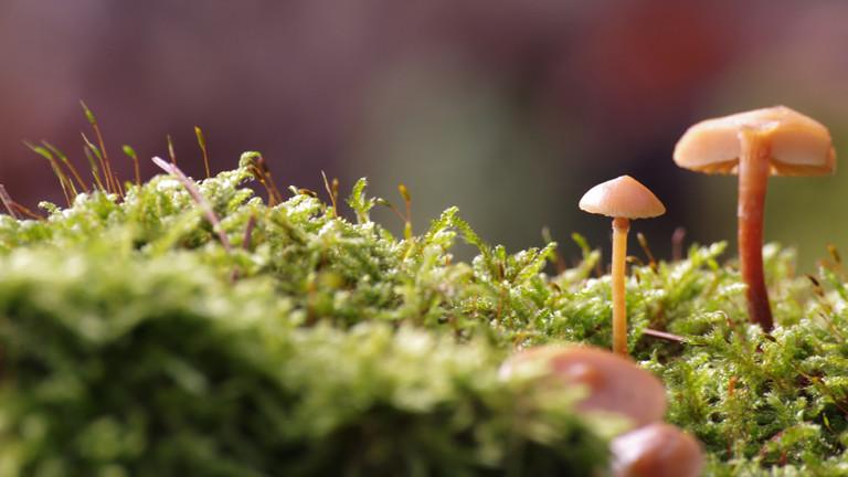 Die Pilzsaison ist da - nur ohne Pilze
