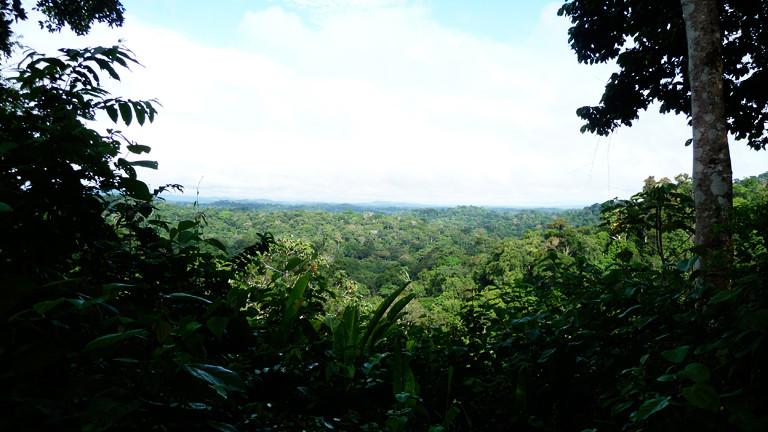 Der Regenwald von Saül