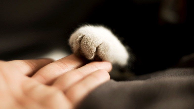 Hand und Katzenpfote