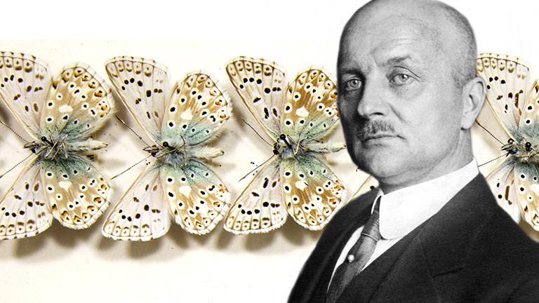 Insektenforscher und Schmetterlingsexperte: Arnold Schultze
