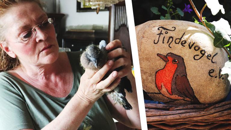"""nnedore Langner mit einer Ringeltaube. Das Bild eines Vogels auf einem Stein mit der Aufschrift """"Findevogel e.V."""""""