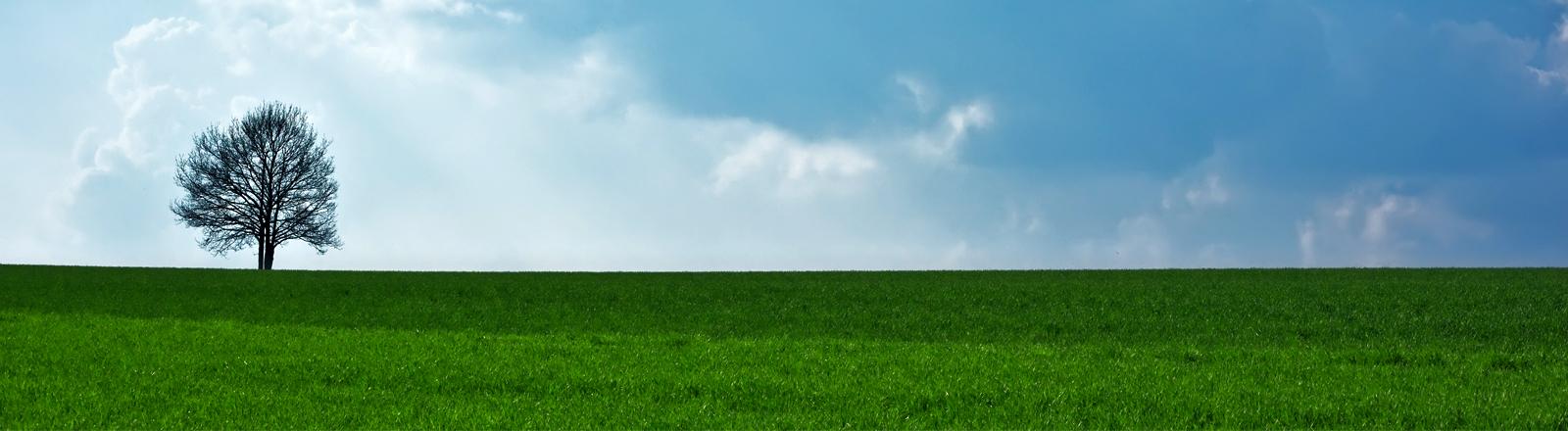 Ein Baum steht einsam auf einer Wiese am Horizont