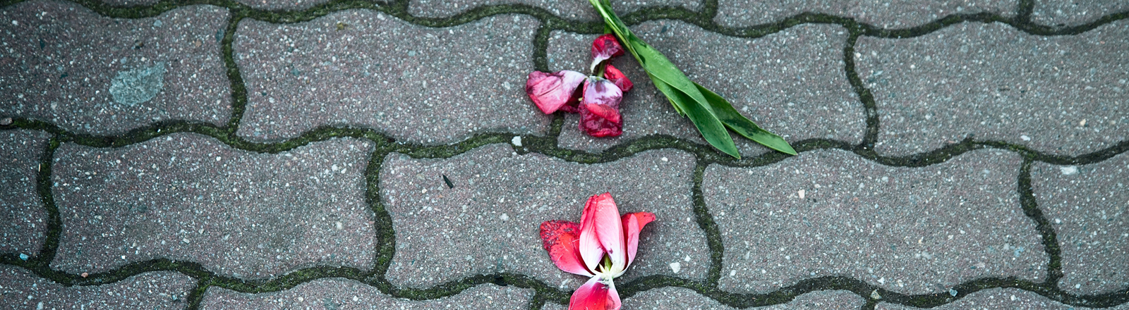 Zertretene Blumen auf dem Boden