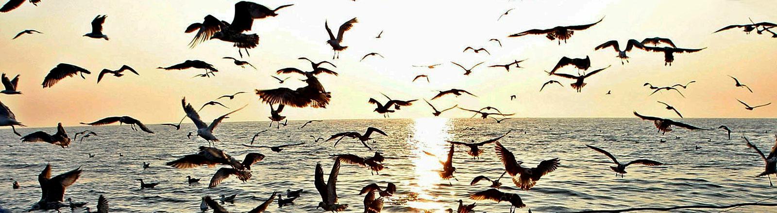 Möwen am Schwarzen Meer in Rumänien.
