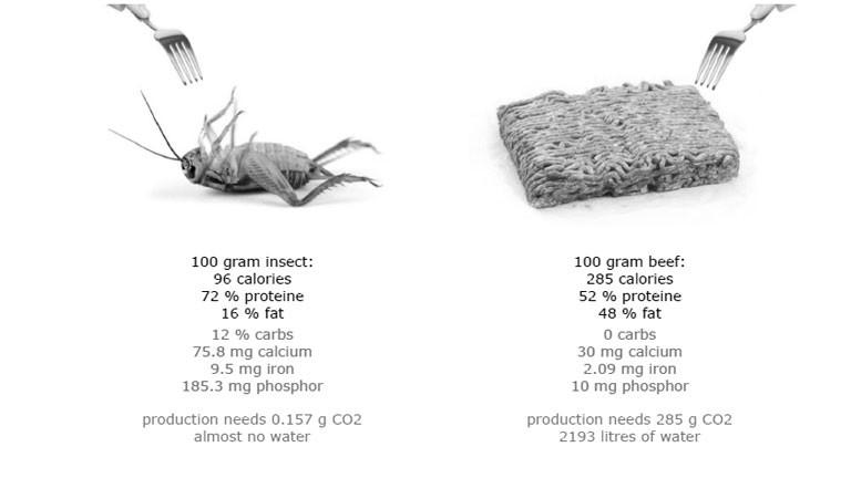 Eine Grafik, die Nährwerte von Insekten mit denen von Fleisch vergleicht.
